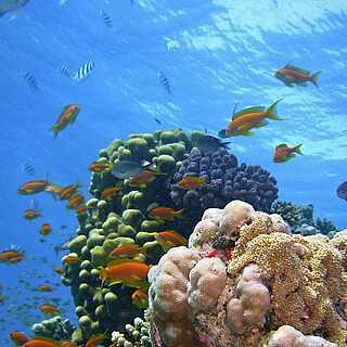 Unterwasserwelt Makadi Bay Aegypten