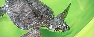 Schildkröte Auffangstation Türkei Ausflug